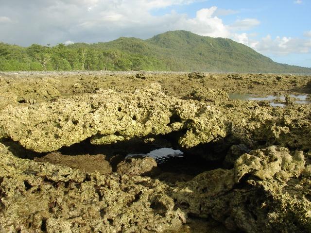 Nias Island dead corals