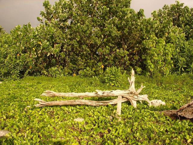 Nias mangrove
